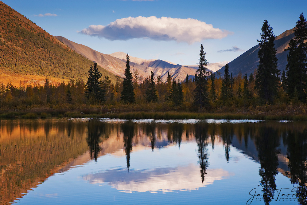 A still arctic lake reflects a single cloud and an autumn landscape in the Ogilvie Mountains of the Yukon Territory, Yukon Territory, Canada