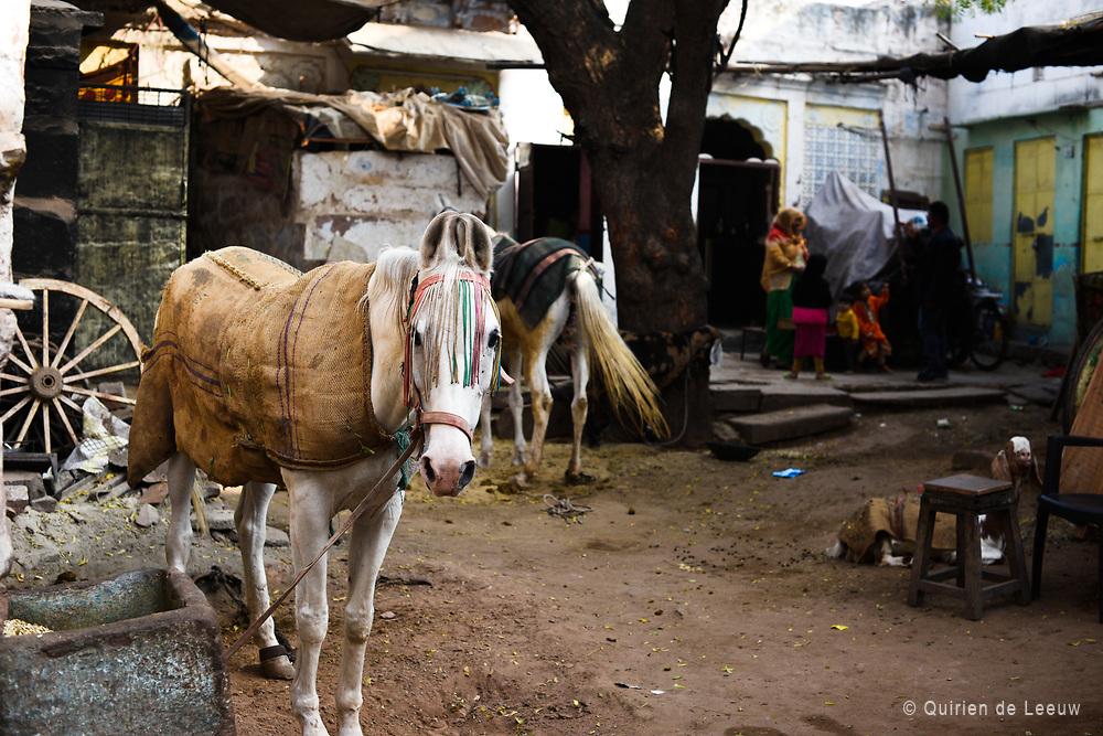 Horse in backyard, India