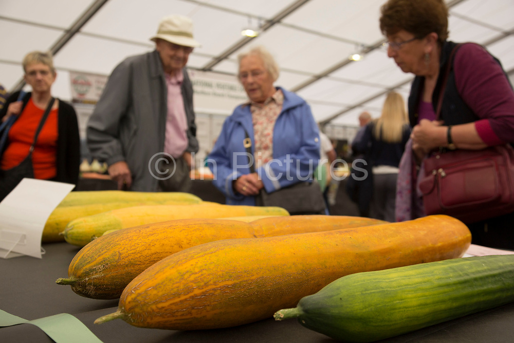 Harrogate Flower Show, North Yorkshire, England, UK. Part of the horticultural show is dedicated to the giant vegetable competition, where perfest specimens of all sorts of fruit and veg compete against each other.