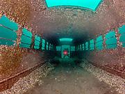 KISS Spirit, rebreather diver on the school bus wreck at Dutch Springs, Scuba Diving Resort in Pennsylvania