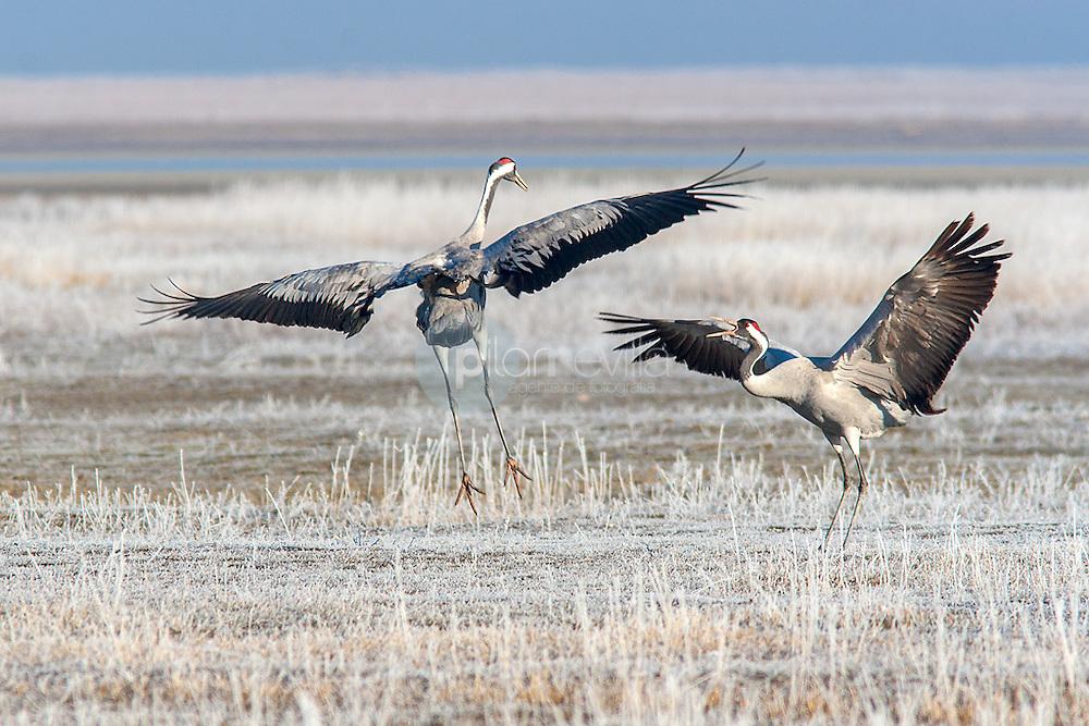 Dos grullas abriendo las alas ©Country Sessions / PILAR REVILLA