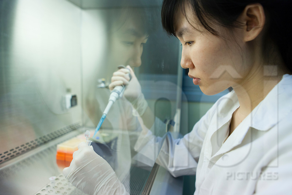 A scientist uses a micropipette for sample testing in a lab at the National Institute of Hygiene and Epidemiology (NIHE) in Hanoi, Vietnam, Southeast Asia