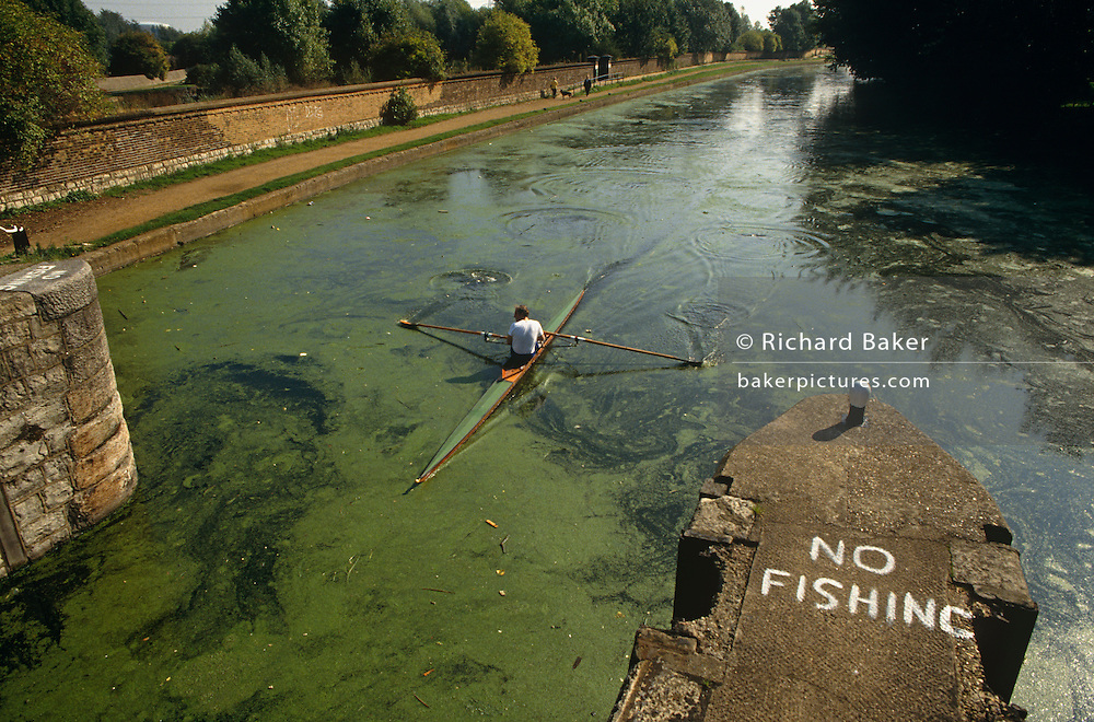 From an aerial perspective, we look down on the green algae and a lone rower who is sculling upstream of the River Lea (Also Lee) in east London, England. The words No Fishing have been painted by hand on a old Victorian lock that once served as a navigable route for barges to negotiate this inner-city waterway. With its source in the Chiltern Hills and ending in the River Thames, this stretch of river has seen development from Saxon times through to the building of the 2012 Olympic site at Stratford. Meticulously placing his oars in the water, he parts the organic growth with the slim boat's hull and looks over his shoulder to check his distance and angle as he nears the lock's concrete spans.
