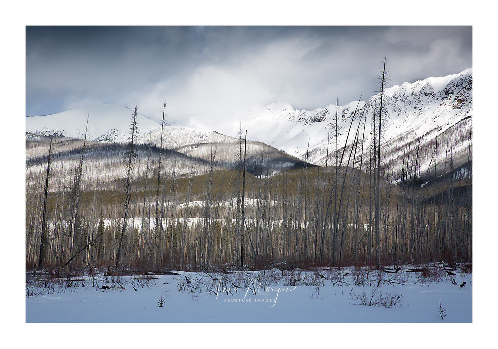 Dappled, gentle light over Rocky Mountains, covered in winter snow and bare winter trees
