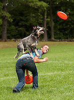 """Ashley Mix and """"Kangaroo Blue"""" an Australian Cattle Dog from Granite State Disc Dogs perform during Gilford Old Home Day festivities on Saturday morning.  (Karen Bobotas/for the Laconia Daily Sun)"""