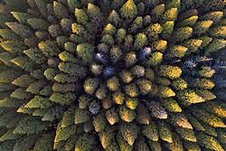 November 3, 2018 - Suqian, China - Aerial photography of forest in Suqian, east China's Jiangsu Province. (Credit Image: © SIPA Asia via ZUMA Wire)