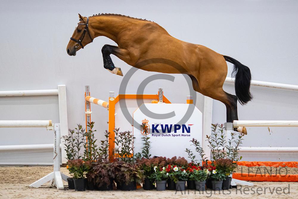 N Eighteen<br /> KWPN Select Sale 2020 <br /> © DigiShots
