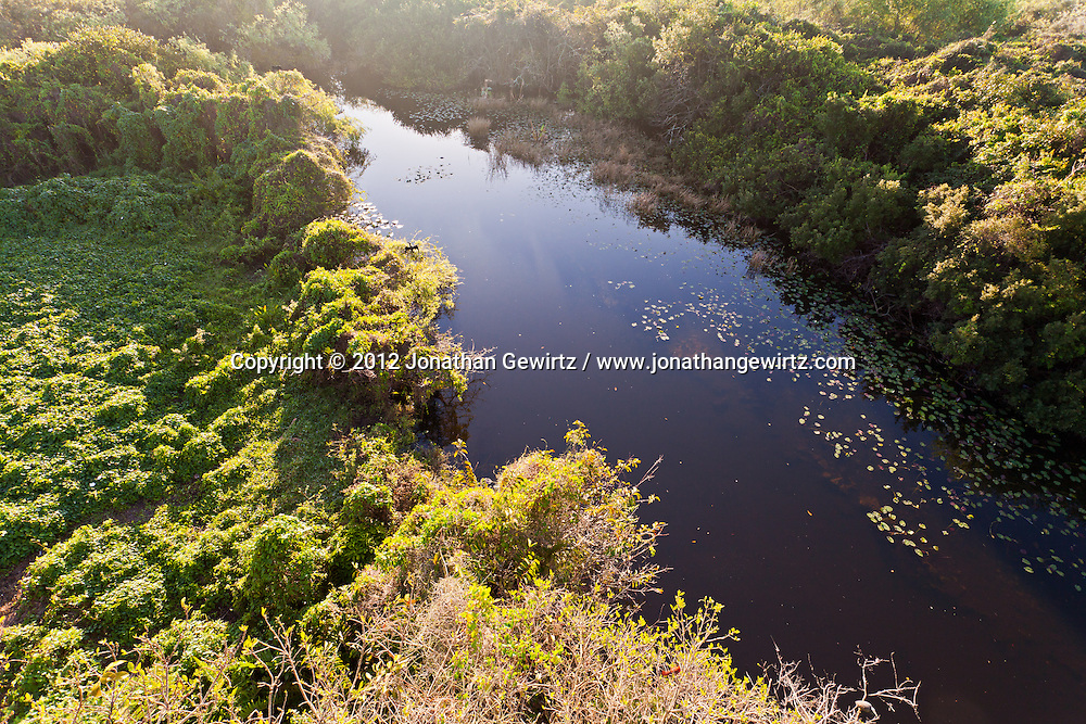 The pond next to the observation tower in the Shark Valley section of Everglades National Park, Florida. WATERMARKS WILL NOT APPEAR ON PRINTS OR LICENSED IMAGES.