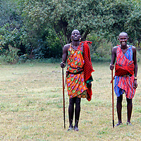 Africa, Kenya, Masai Mara. Maasai Warriors demonstrates hunting and archery skills for visitors to Cottar's 1920's safari Camp.