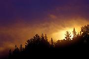 Stormy sunrise light over trees - Quebec, Canada.