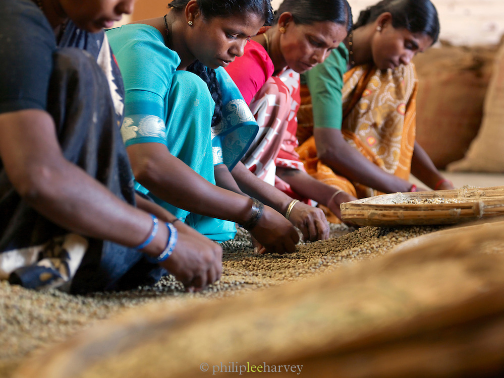 Sorting coffee beans by hand in coffee plantation, Malabar, Mangalore, Kerala, India