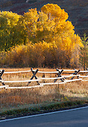 Road side, Park City in (Fall), Autumn showing colour, Utah, United States of America
