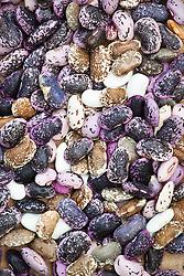 Hungarian beans