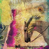 """White horse photo based mixed medium collage.<br /> :::<br /> """"The imagination liberates us from our immediate circumstances and holds the constant possibility of transforming the present.""""<br /> -Sir Ken Robinson, Out of Our Minds: Learning to be Creative"""