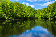 Photo of a pond surrounded by green trees in Allaire State Park in the Spring.
