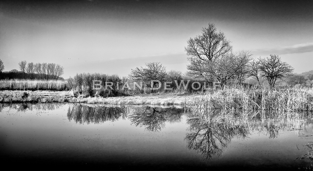 Prairie Jewel-life teams in the pond on the prairie.