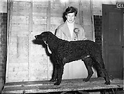 8/12/1952<br />