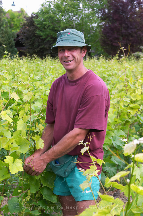 The vineyard in the garden behind the house. A vineyard worker tying up the metal wires that will support the vines with plastic clips, Champagne Jacquesson in Dizy, Vallee de la Marne, Champagne, Marne, Ardennes, France