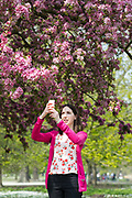 A woman takes a photograph on her mobile phone of a cherry blossom tree during sunny spring weather in Regents Park in London, England on April 17, 2019.