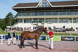 Susanne Jensby Sunesen, (DEN), Thy s Que Faire - Horse Inspection - Alltech FEI World Equestrian Games™ 2014 - Normandy, France.<br /> © Hippo Foto Team - Jon Stroud<br /> 25/06/14