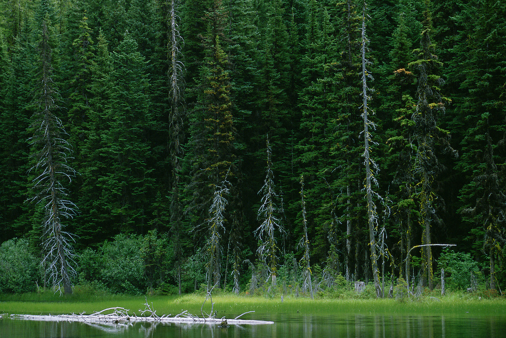 Evergreen forest at the edge of Nada Lake Central Cascade Mountains Washington USA