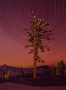 Six hour night exposure of star trails rotating around Polaris, the North Star, silhouetting Mountain Hemlock on the rim of Crater Lake, Crater Lake National Park, Oregon.