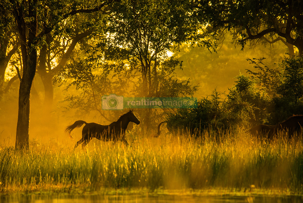 , Botswana - 3/31/2017 - (Photo by Shannon Wild/VWPics) *** Please Use Credit from Credit Field *** *** Please Use Credit from Credit Field ***