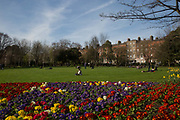Early bloom in Merrion Square Park on 2nd April 2017 in Dublin, Republic of Ireland. Dublin is the largest city and capital of the Republic of Ireland, it's on Ireland's east coast at the mouth of the River Liffey.