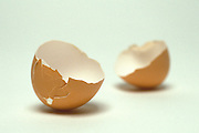 still life of egg shells
