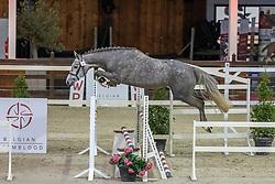 056, Smokey Fields RB<br /> BWP Hengstenkeuring 2021<br /> © Hippo Foto - Dirk Caremans<br />  12/01/2021