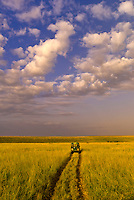 A safari vehicle touring Masai Mara National Reserve, Kenya