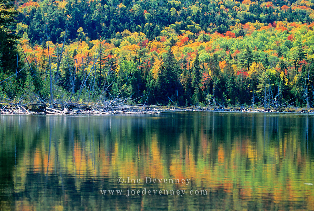 A small pond in Acadia National Park during autumn.