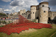 Marking the centenary of the the beginning of the First World War (WW1) in 1914, ceramic poppies created by artist Paul Cummins, recreate a river of blood emergng from a corner of the Tower of London. Remaining in place until the date of the armistice on November 11th. Across the world, remembrance ceremonies for this historic conflict that affected world nations, London saw many such gestures to remember the millions killed in action at the beginning of the 20th century.