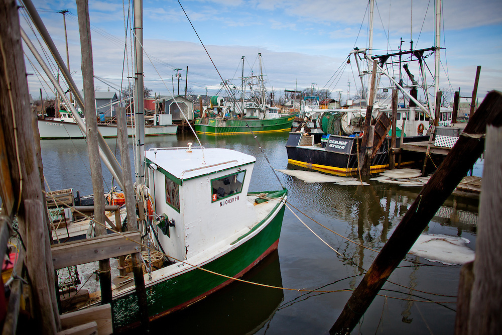 """The Port of Belford is located in the shelter of Sandy Hook on the most northern section of the New Jersey coast. With ready highway access, ocean-fresh seafood harvested by the fishermen based in Belford can be in New York's Fulton market within an hour or to any of tens of millions of consumers in the same day it was caught. Many of the vessels berthed in Belford are owned by members of the Belford Fishermen's Cooperative, one of the most active fishermen's cooperatives on the Atlantic Coast. The fleet is composed of otter trawlers, gill netters, lobster boats and purse seiners. Many of the fishermen there rely on the """"traditional"""" Mid-Atlantic mixed trawl fishery, having adjusted their fishing - and marketing - efforts to be in tune with the annual migrations of the silver and red hake, fluke, flounder, seabass and porgies that make up a large part of their harvest."""
