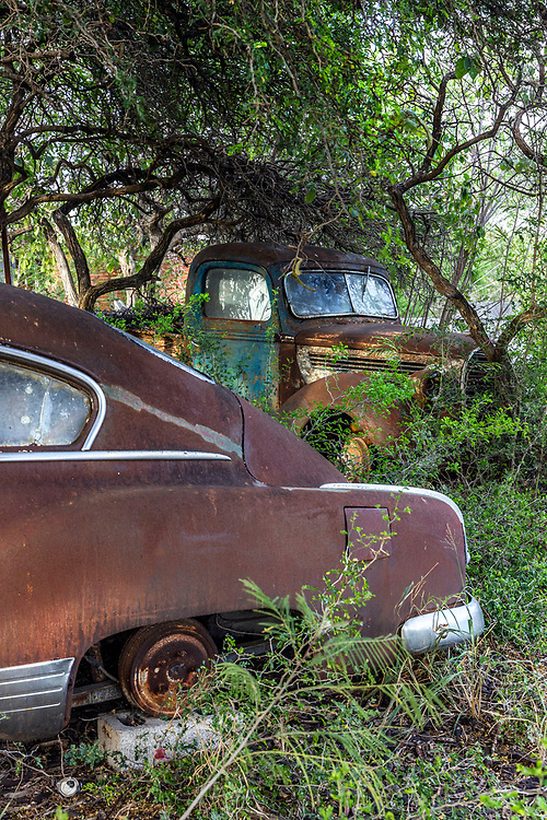 Classic old, rusting, american cars hidden behind the trees, Zapata County, TX, USA