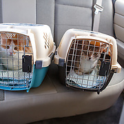 Cats in Crates/Car