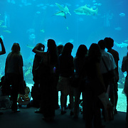 Visitors at Lisbon's Oceanarium.