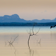 Pelican flying over a lake near Viñales