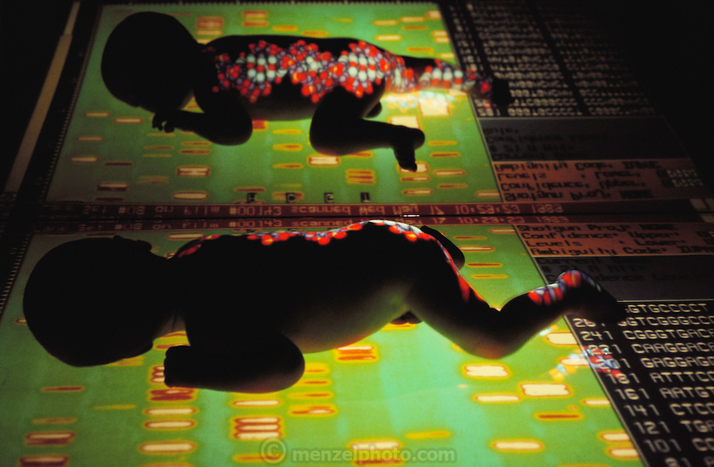 Research on the human genome: composite image of an infant and a computer graphics model of the DNA molecule overlaid on a computer enhanced DNA sequencing autoradiogram. DNA sequencing of chromosomes involves decoding the base pair sequence of sections of DNA - most usefully, those sections called genes which encode specific proteins. Sequencing and mapping - surveying each of the 23 pairs of human chromosomes to locate genes or other important markers - are two phases in the human genome project. The construction of such a complete genetic map involves a detailed biochemical survey of every gene expressed on all 23 pairs of human chromosomes. (1989).