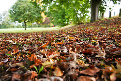 ©Licensed to London News Pictures 04/10/2019.<br /> Sidcup,UK. Autumn leaves. Autumnal weather this morning for dog walkers at Footscray Meadows, Sidcup, South East London. Photo credit: Grant Falvey/LNP