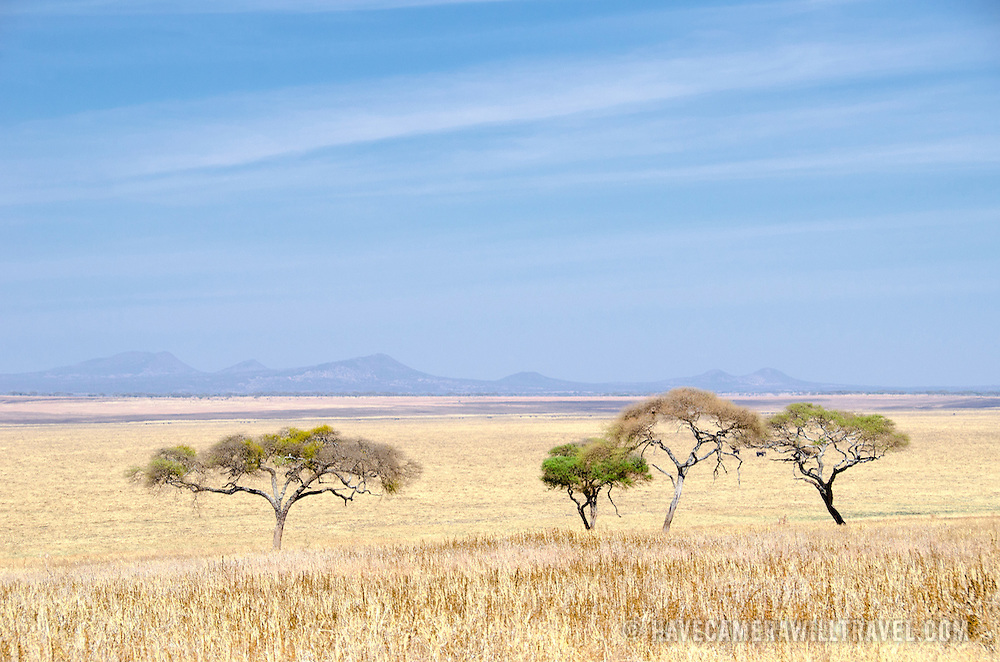 Looking across the wide open expanses of the swamp plains at Tarangire National Park in northern Tanzania not far from Ngorongoro Crater and the Serengeti.