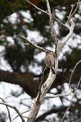 Songbird, Gossip Island, San Juan Islands, Washington, US