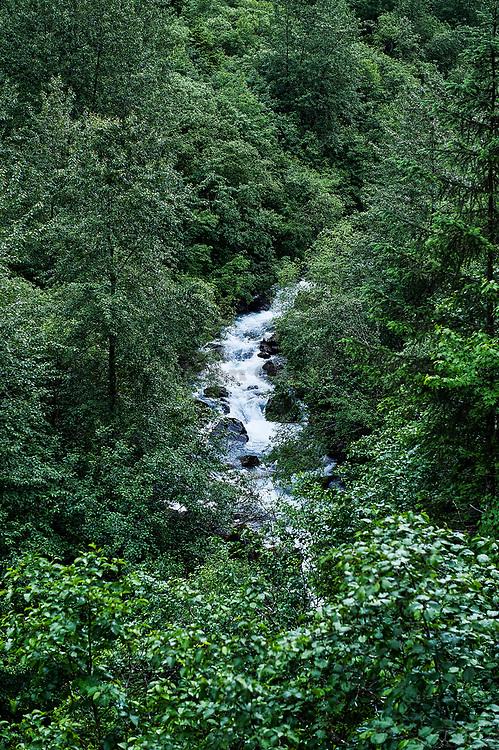 Mountain forest stream, Alaska, USA.