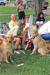 Golden Retriever & Owner Interacting