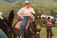 Senior citizen, cowgirl, mule (Mulus mula, Montana Mule Days, Montana, MODEL RELEASED