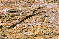Impressions of roots and limbs of a mangrove swamp in the Dakota sandstone on Dinosaur Ridge near Morrison, CO.