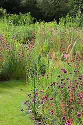 Tom Stuart-Smith's prairie meadow. Planting includes Dianthus carthusianorum, Penstemon barbatus 'Coccineus', Eryngium yuccifolium and Liatris aspera