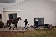 Amish boy hitches a horse to a buggy in Gordonville, PA.