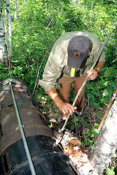 Shay Hurd Sedating Black Bear