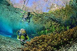 Taucher im glasklaren Quelltopf von Ginnie Springs, scuba diver in Ginnie Spring, Clear swelling pot, High Springs, Gilchrist County, Florida, USA, United States, MR yes, Februar 2014